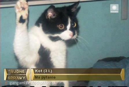 Kot :D ma pytanie