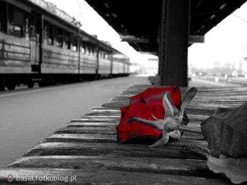 Róża na peronie