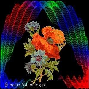 w kolorowym świetle...