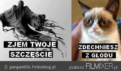 Dementorze, zdechniesz z głodu