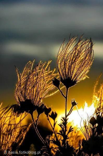 Najpiękniejsze są wspomnienie, które ma się jeszcze przed sobą. ..