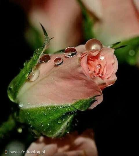 kwiatuszek..