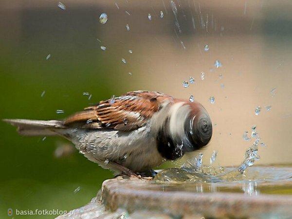 jak ptak otrząsający sie z wody..nic mnie nie zlamie..