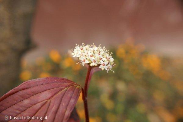 kwiat jest usmiechem rosliny