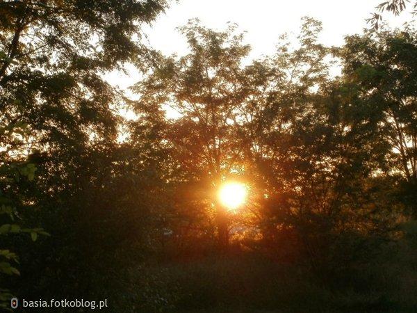 słoneczko miedzy liśćmi..
