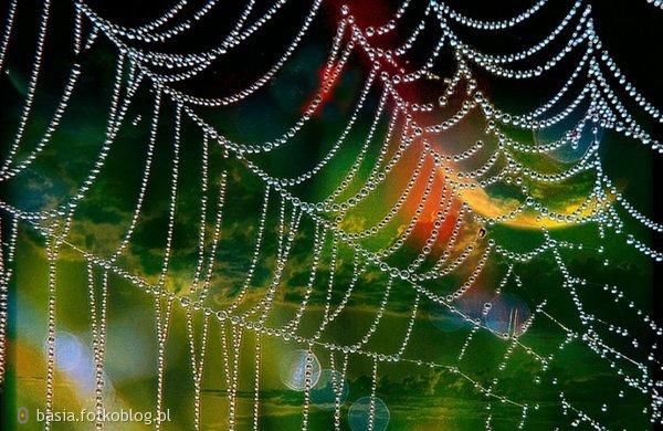 Tęczowa pajęczynka