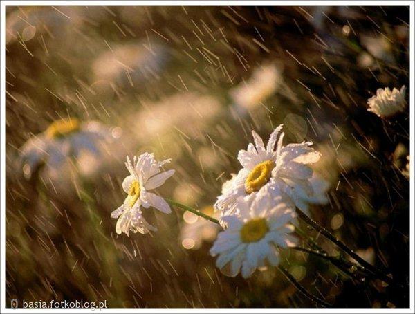 w deszczu...
