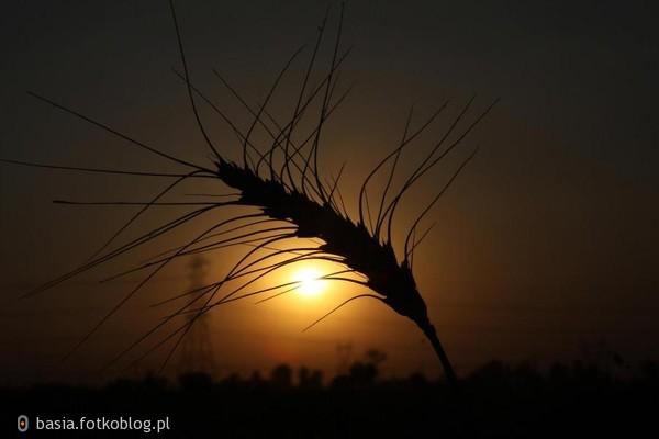 Szczęsliwy jest ten kto przy zachodzie słońca cieszy się wschodzącymi gwiazdami