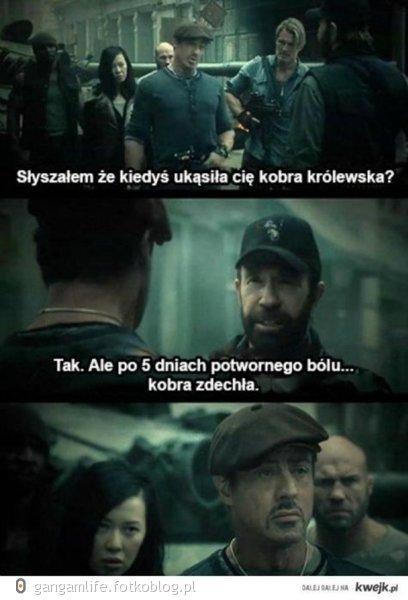 Chuck Norris i kobra :D