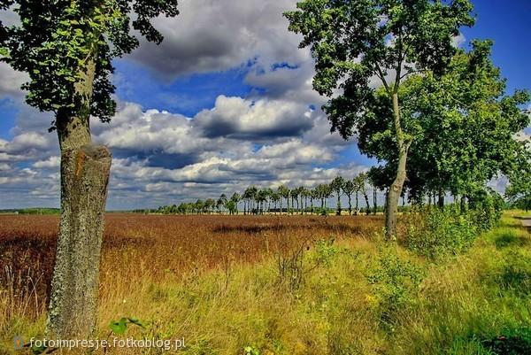 Krajobraz Podlasia