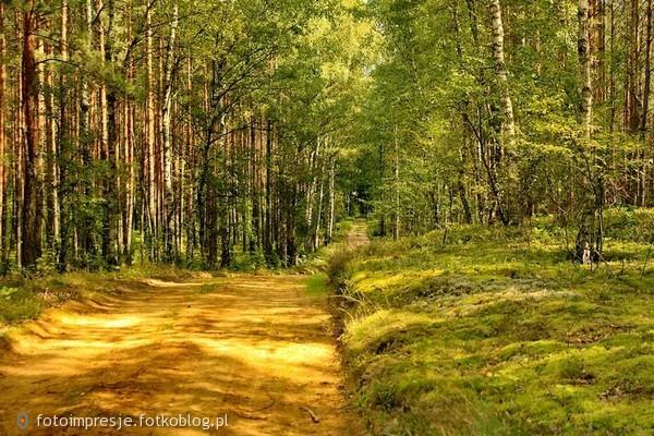 Idąc przez las
