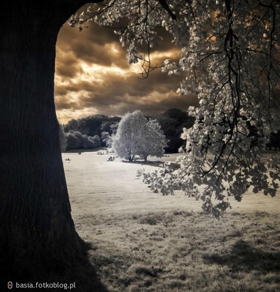 W cieniu drzew