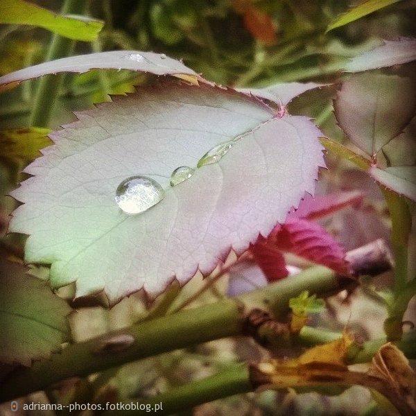 kropla deszczu :)