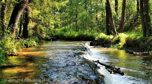 Rzeka Tanew w Suścu;)