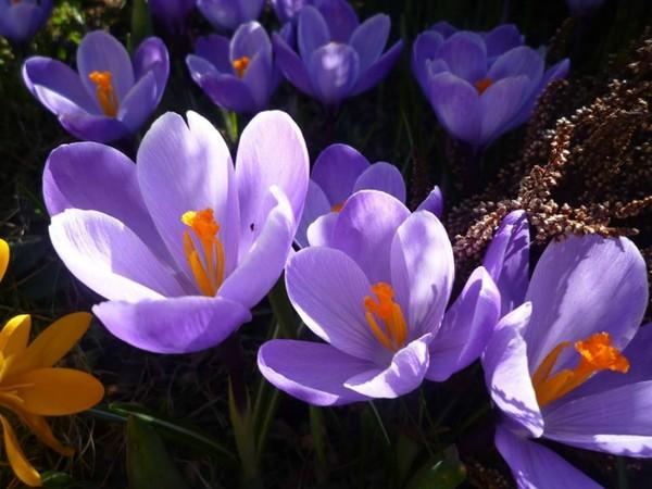 ..oraz namiastka wiosny