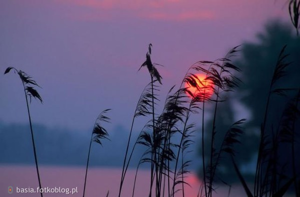 Czym jest słońce dla ziemi, tym miłość dla duszy.