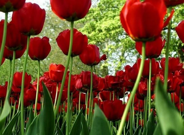 w świecie kwiatów..
