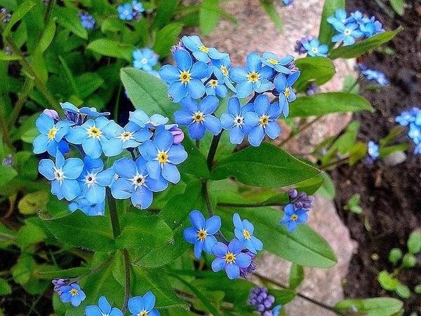 Szczęście, które posiadasz jest jak ziarno; szczęście, które dzielisz – to kwiat. ..