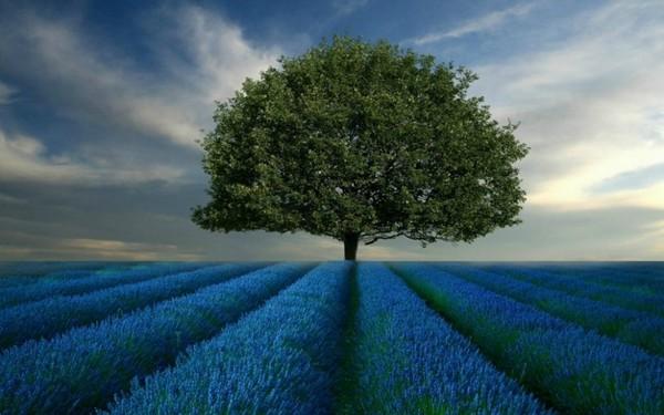 samotne drzewo..