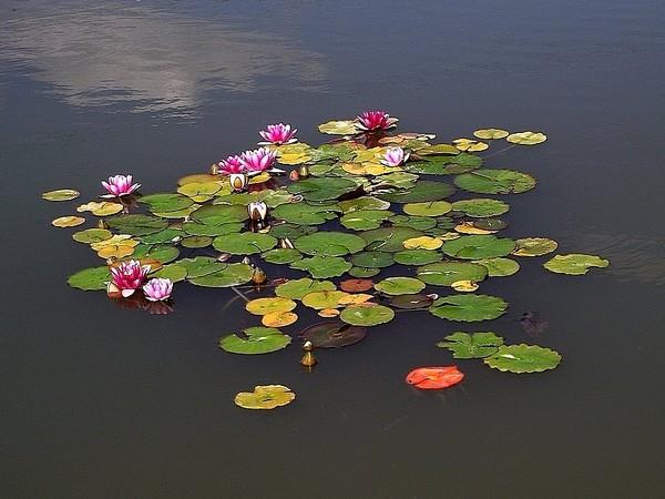 wodny ogród