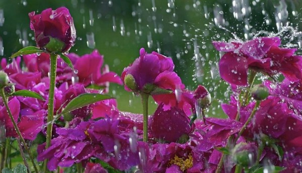 Żeby zobaczyć tęczę, trzeba najpierw przeżyć deszcz.  ...