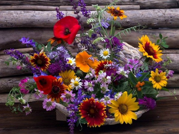 polne kwiatuszki...