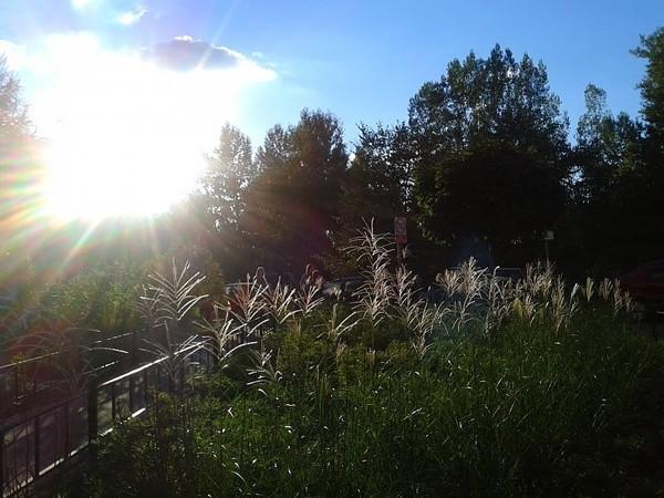 trawy w pełnym blasku