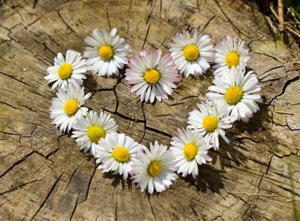 zabawa kwiatami..