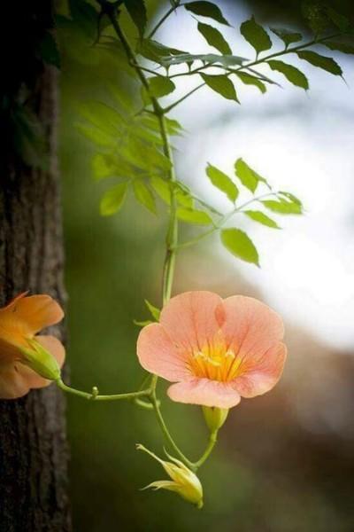 polny kwiatuszek..