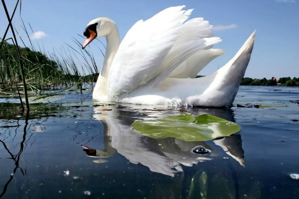 Nie tylko łabędź kryje w sobie niesamowite piękno...