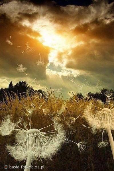 ..z powiewem wiatru..