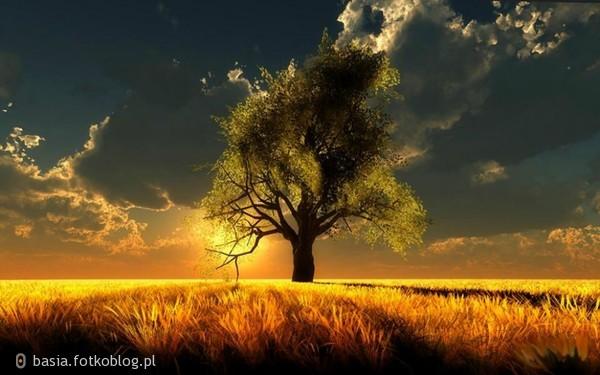 ..samotne drzewo...