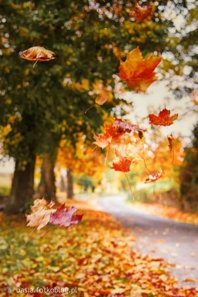 Wiatr unosi liść do góry ale nieważne jak wysoko poleci i tak zawsze spadnie na ziemię.