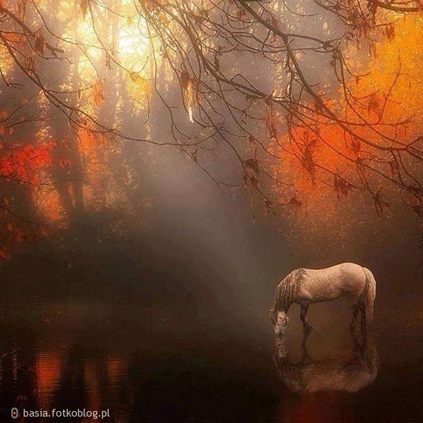 Silne uczucia są nieokiełznane jak dzikie konie...