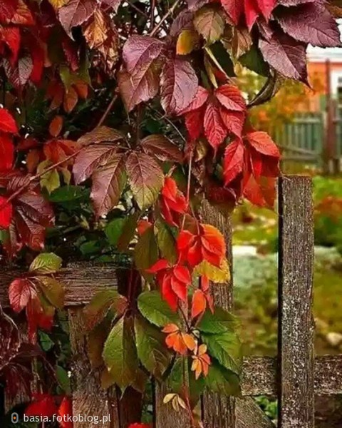 ...uroki jesieni..