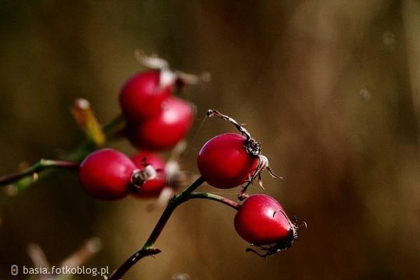 ..jesienny czas...