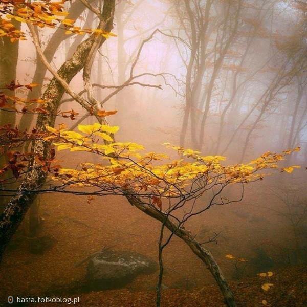 ..jesienna mgiełka..