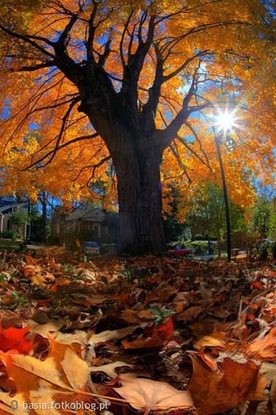 w listopadowym słońcu...