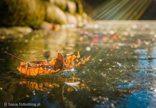 Co ma przeminąć, to przeminie, jak liść jesienny, co z drzewa musi spaść. Szczęście, miłość, ból, cierpienie. Wszystko w życiu ma swój czas.
