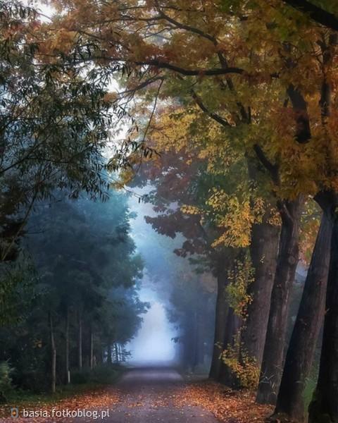 w jesiennym klimacie..