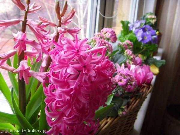 Łatwo chwalić kwiaty, lecz być kwiatem?