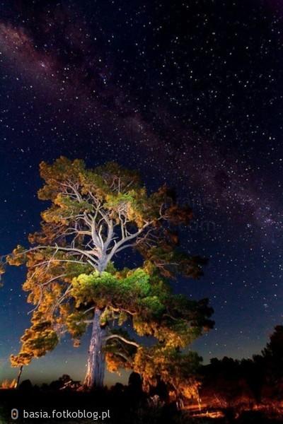 Patrząc nocą na niebo, nie szukaj swej gwiazdy...Znajdziesz ją tu, na ziemi. Jej blask ujrzysz w oczach ukochanej osoby...