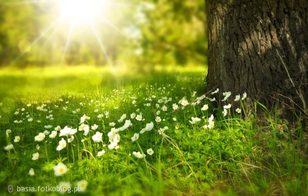 ..wiosna..wiosna