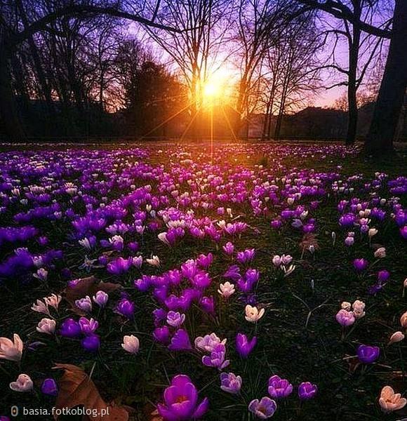 ..w promieniach zachodzącego słońca...