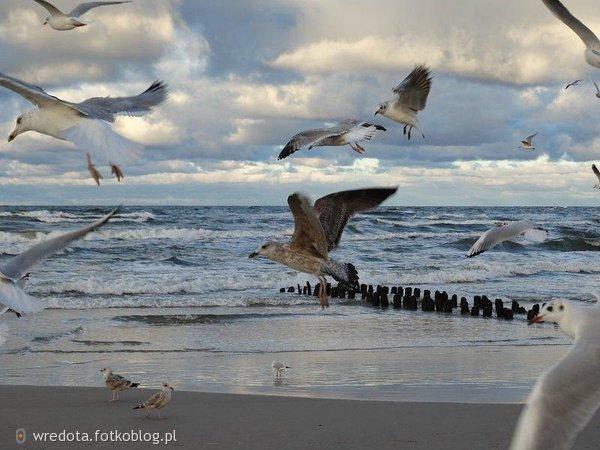 niebo,woda,ptaki
