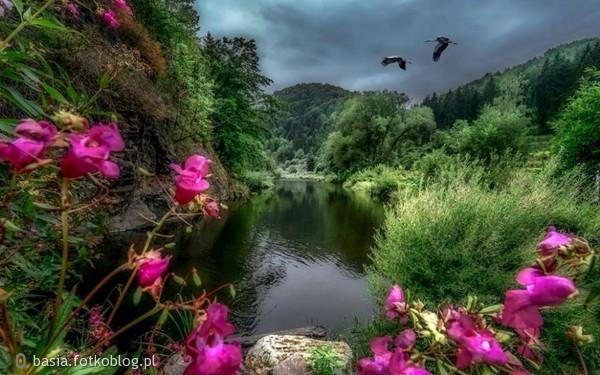Kwiaty są pięknymi słowami i hieroglifami natury, którymi daje nam ona poznać, jak bardzo nas kocha...