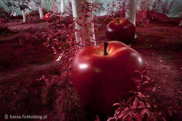jabłuszko...