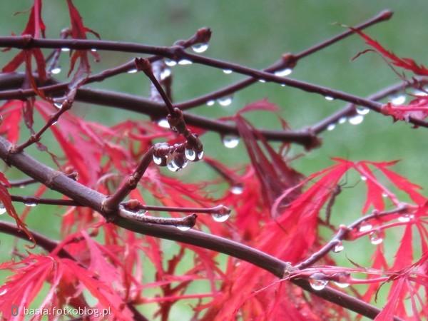 deszczowo..ech ta jesień..