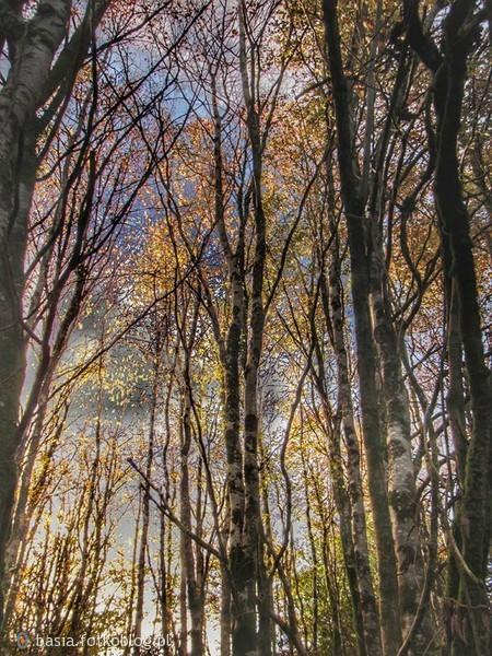 I nie ma nic piękniejszego nad jesienne ramiona drzew na tle nieba...