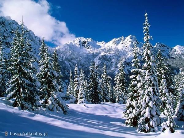 zimowe piękno...